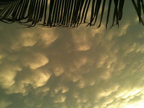 Tex sky