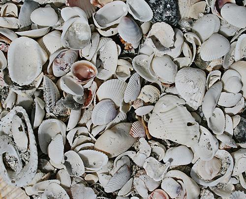 Tex shells